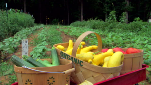 garden with organic produce in wagon - gardening glove stock videos & royalty-free footage