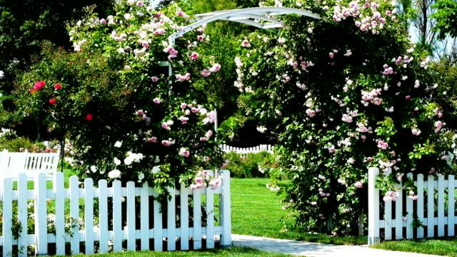 giardino con rose - formal garden video stock e b–roll