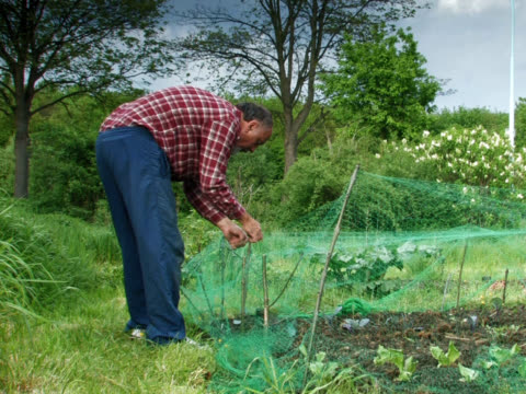 pal : 庭園作業 - 網状点の映像素材/bロール