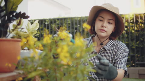 garden workers working in a greenhouse plantation - pruning stock videos & royalty-free footage