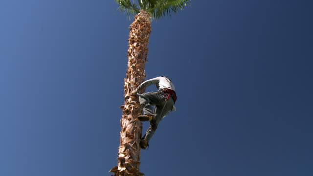ws td gardener climbing down from palm tree after finishing tree trimming / rancho mirage, clifornia, united states - rancho mirage stock videos & royalty-free footage