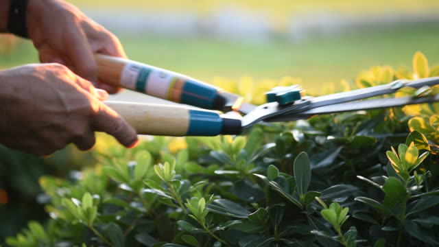 a gardener clips grass with shears - pruning shears stock videos and b-roll footage