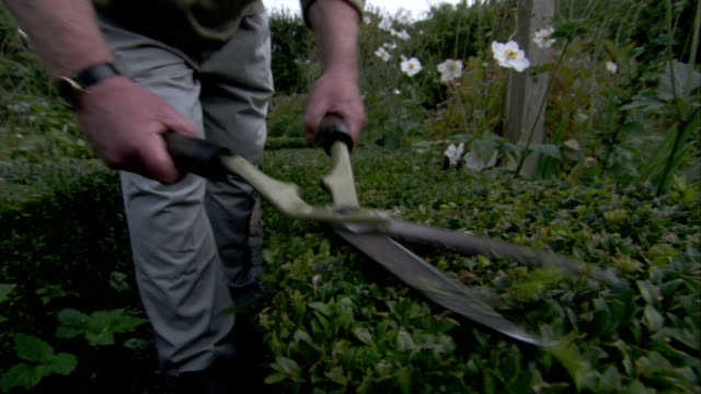 A gardener clips the hedges of the Lord Leycester Hospital in Warwick, England. Available in HD.