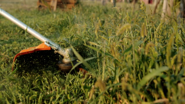 slo mo gardener cuts the grass with a trimmer - tosaerba video stock e b–roll