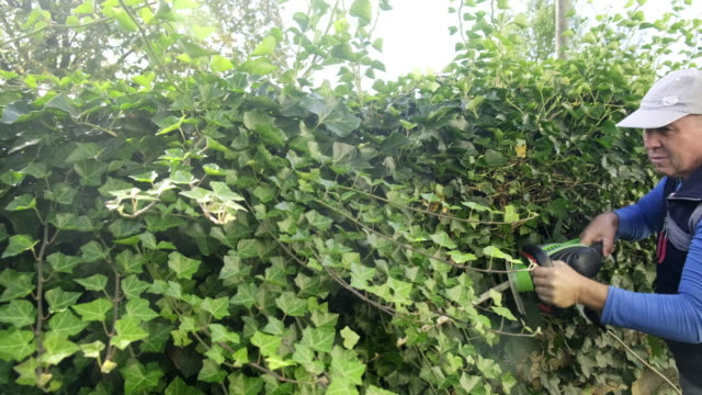 gardener cutting hedge in garden stock - cutting stock videos & royalty-free footage