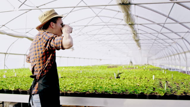 slo mo ds gardener drinking coffee in the greenhouse - potting stock videos and b-roll footage