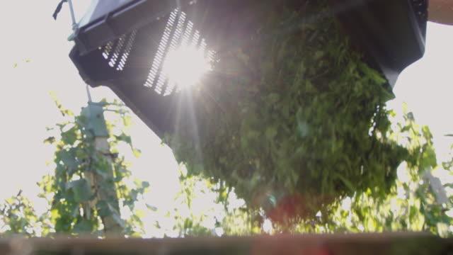 slo mo trädgårdsmästare tömning en gräsuppsamlaren - gräsmatta odlad mark bildbanksvideor och videomaterial från bakom kulisserna