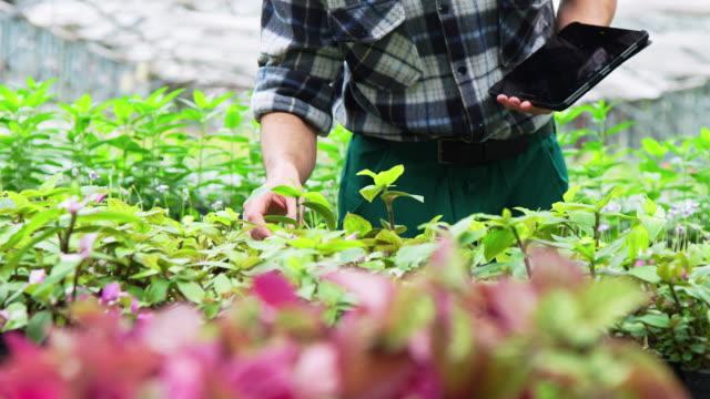 gardener examining plants in greenhouse - organic farm stock videos & royalty-free footage