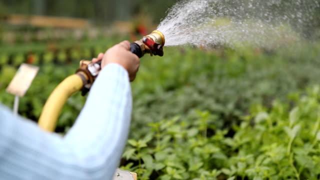 gardener hands watering plants at garden center - centro per il giardinaggio video stock e b–roll