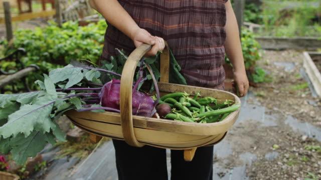 新鮮な食材のバスケットを持って庭師 - アブラナ科点の映像素材/bロール
