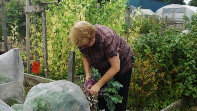 gardener inspecting kohlrabi - netting stock videos and b-roll footage