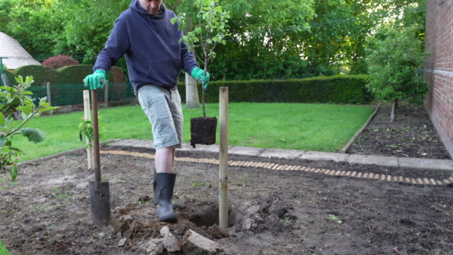 gardener planting fruit tree - gardening glove stock videos & royalty-free footage