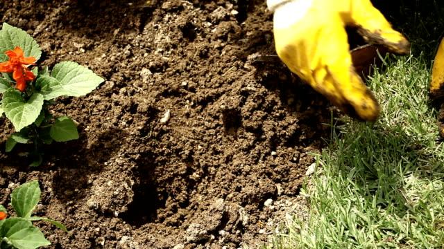 vidéos et rushes de jardinier planter des fleurs de printemps - gant de jardinage