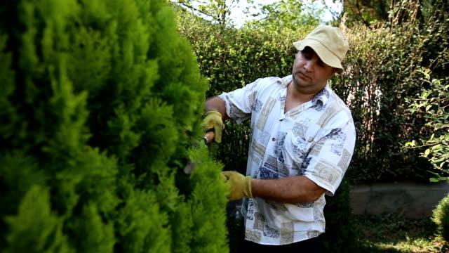 gardener pruning tree with scissors - pruning stock videos & royalty-free footage