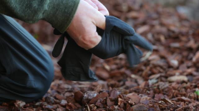 vidéos et rushes de gardener putting on gloves - gant de jardinage