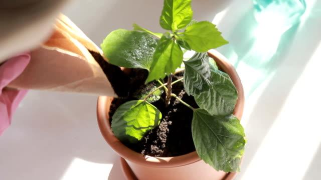 gardener putting young plants in pots - vattna bildbanksvideor och videomaterial från bakom kulisserna