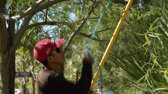 ms zo gardener standing on ground trimming branches from tree with pole pruner / rancho mirage, california,  usa - rancho mirage stock videos & royalty-free footage