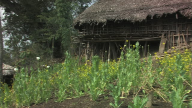 a gardener tends to landscaping near a bamboo building with a thatched roof in india. - thatched roof stock videos & royalty-free footage