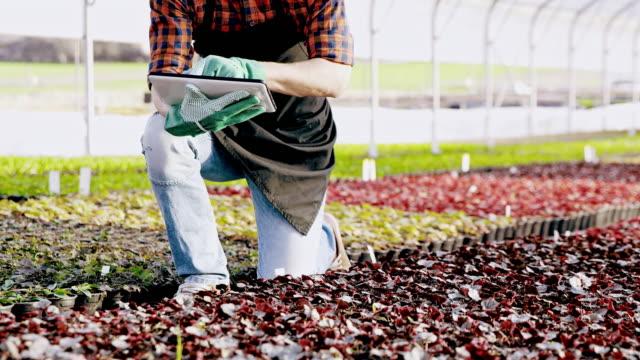 vídeos de stock e filmes b-roll de ds ms gardener using a tablet for analyzing plant growth - colocar planta em vaso