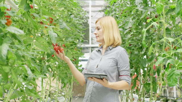 ws gardener with a tablet doing a quality control in a greenhouse - quality control stock videos & royalty-free footage