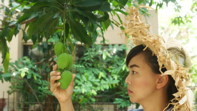 vídeos y material grabado en eventos de stock de mujer de jardinero recoger un mango fresco del árbol - mango fruta tropical