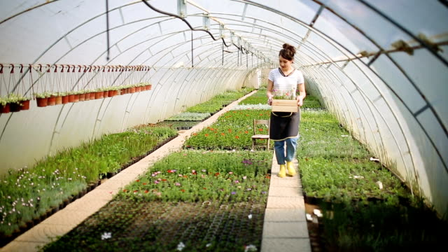 Gardener woman planting flowers