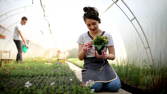 gardener woman planting flowers - glove stock videos and b-roll footage