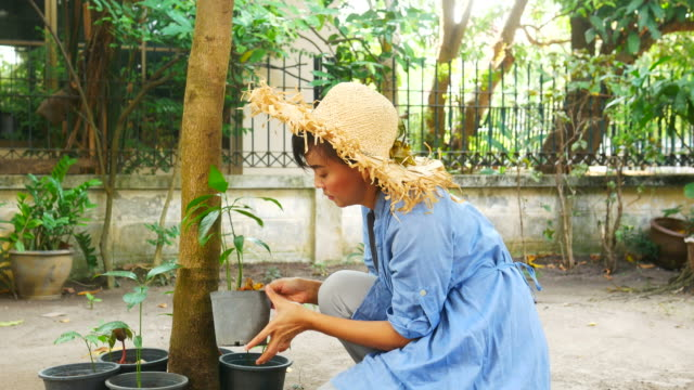 gardener woman take care of sprout's mango - mango stock videos and b-roll footage