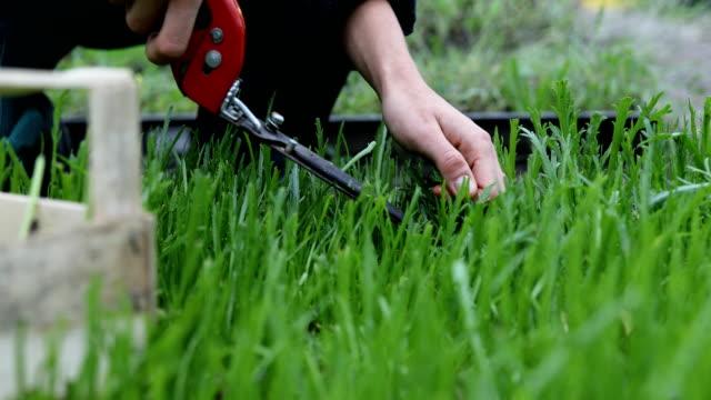 gardener working in organic farm - pruning shears stock videos and b-roll footage