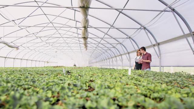 vidéos et rushes de ds ws jardiniers analyser la croissance des plantes en serre - fleuriste