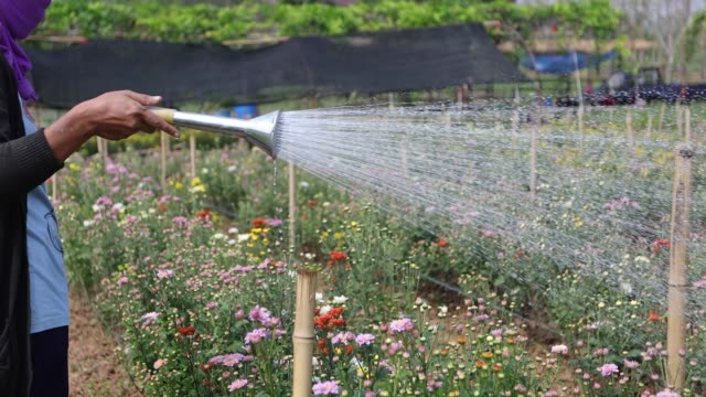 gardeners are watering flowers. - garden center stock videos and b-roll footage
