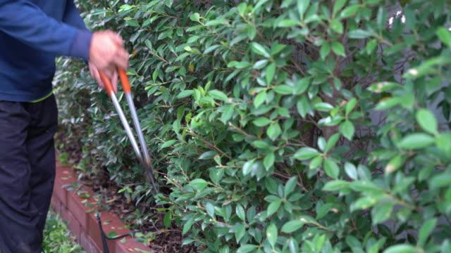 庭師は庭の仕事のためのエンジンチェーンソーで木の枝を飾ります。 - 針状葉点の映像素材/bロール