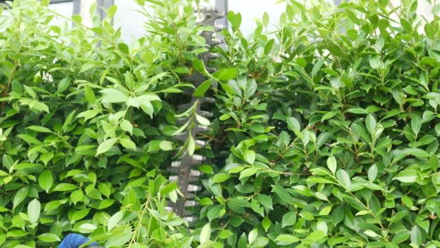 vídeos y material grabado en eventos de stock de árbol de corte de mano del jardinero con trimme - seto