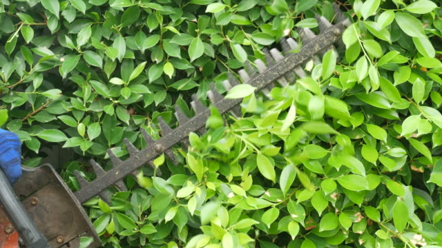 gardener's hand cutting tree with trimme - lawn stock videos & royalty-free footage