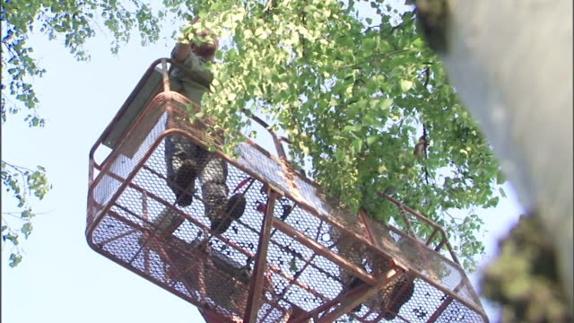 gardeners prune a tree from a basket crane. - pruning stock videos & royalty-free footage