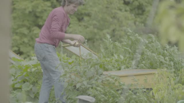 gardeners work in allotments in berlin, germany on friday, july 28, 2017 - community garden stock videos & royalty-free footage