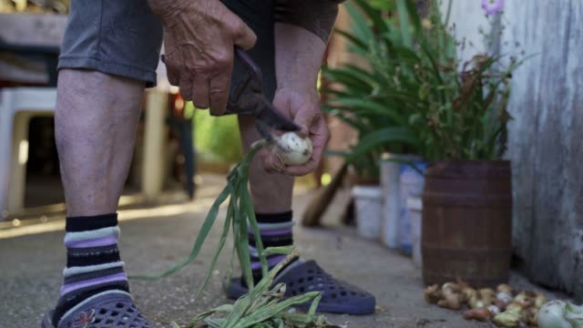 gardening, agriculture. senior person cleaning the onions from the vegetable garden to prepare them for the winter. - agricultural occupation stock videos & royalty-free footage