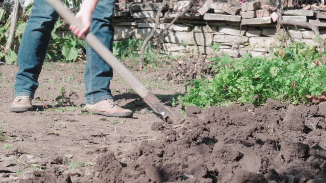 gardening and agriculture. young farmer woman plowing and taking care of the soil. working the cultivated land in the vegetable garden. - agricultural occupation stock videos & royalty-free footage
