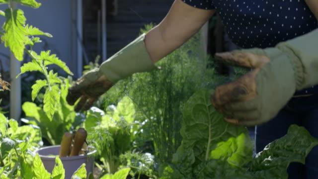 vídeos y material grabado en eventos de stock de jardinería en casa - guantes de protección