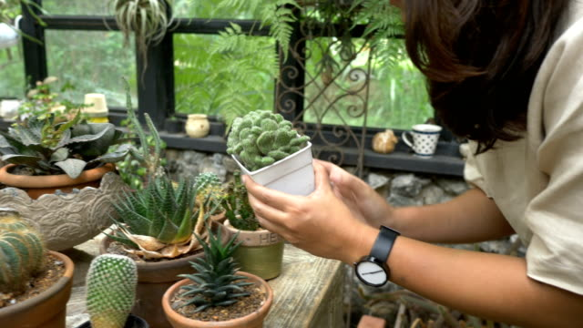 gardening cactus - succulent plant stock videos & royalty-free footage