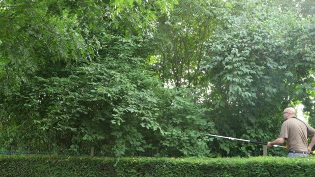 gardening equipment operator pruning branches. - pruning stock videos & royalty-free footage