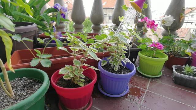 gardening in house - gardening glove stock videos & royalty-free footage