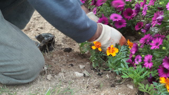 gardening in spring - gardening glove stock videos & royalty-free footage
