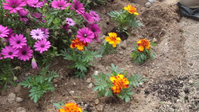 vidéos et rushes de jardinage au printemps - gant de jardinage
