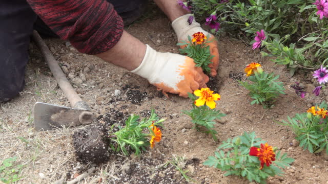 gardening in spring - selimaksan stock videos & royalty-free footage