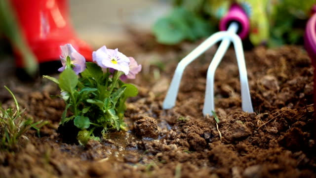 gardening tools: watering can, flowers, gloves, spade, soil. spring in the garden concept layout with free text space. - potting stock videos and b-roll footage