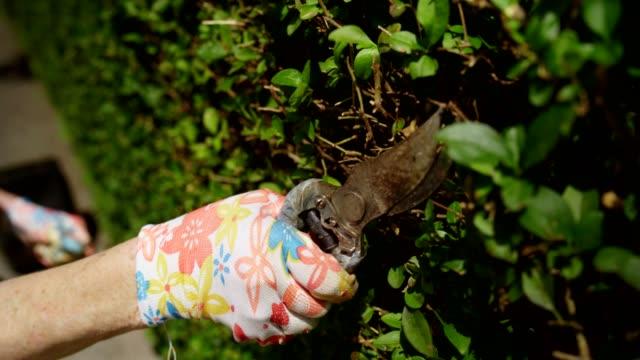 gardening - gardening glove stock videos & royalty-free footage