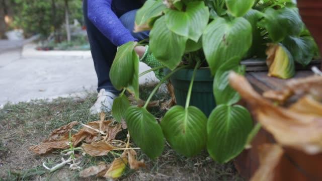 vídeos de stock e filmes b-roll de gardening - ancinho equipamento de jardinagem