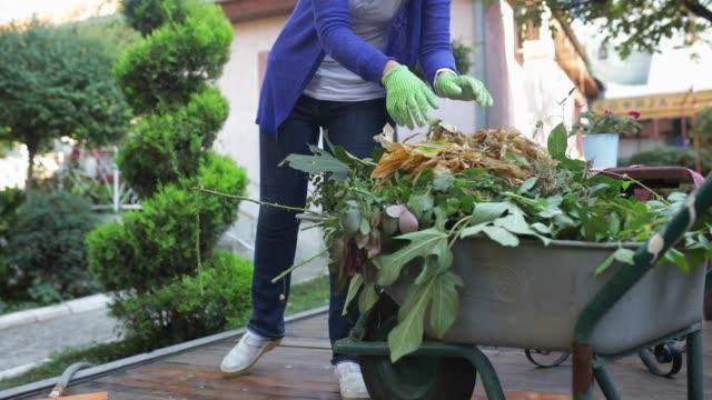vídeos y material grabado en eventos de stock de jardinería - formal garden