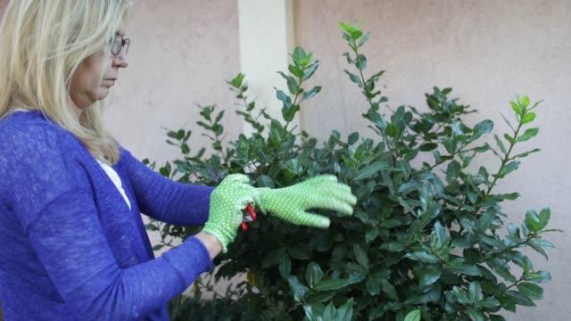 trädgårdsskötsel - trädgårdshandske bildbanksvideor och videomaterial från bakom kulisserna